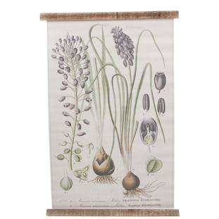 WALL PICTURE  TASSEL HYACINTH 49.5X76CM