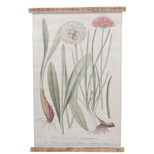 WALL PICTURE ALLIUM 49.5X76CM