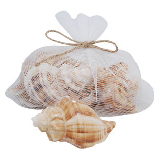 DECORATION SHELLS 4